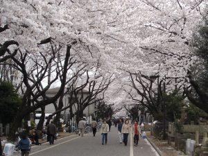 Yanaka cemetery 300x225 - Yanaka: Nostalgic Neighborhood of Tokyo