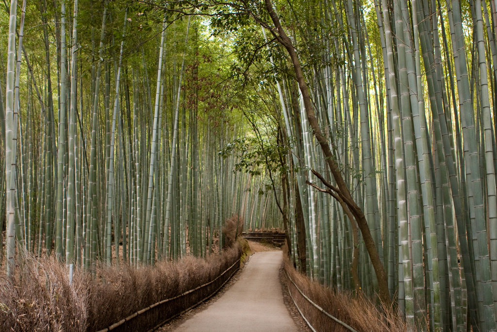 Bamboo groove Kyoto 2 1024x683 - Kyoto