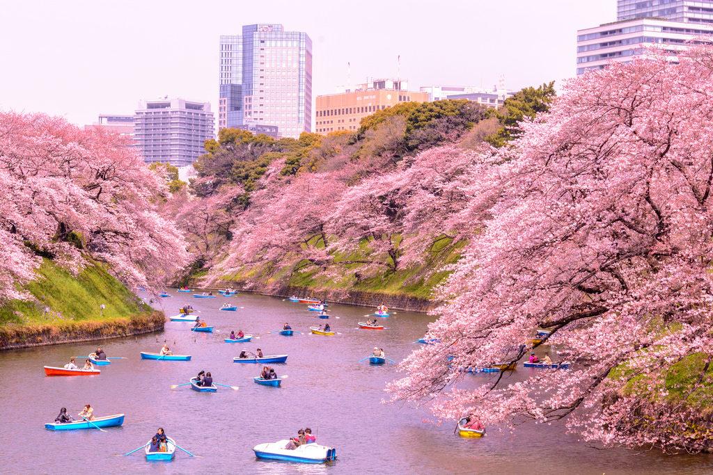 Chidorigafuchi Kitanomaru Park 1 1024x683 - Tokyo