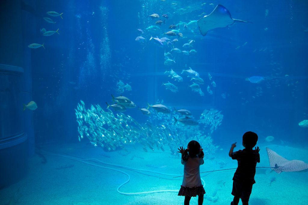 Kaikyukan Aquarium 3 1024x683 - Osaka