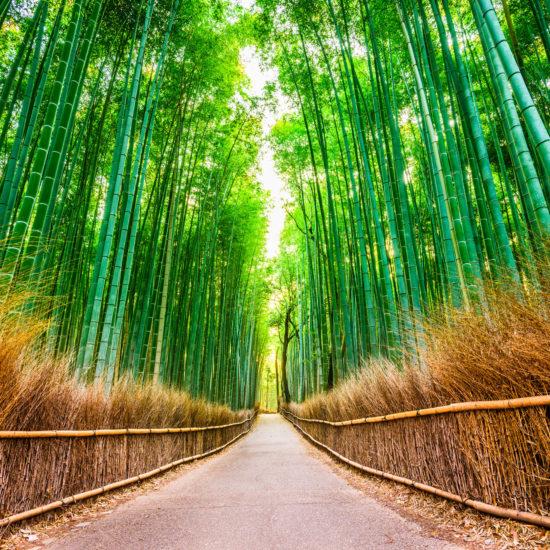 bamboo 1 550x550 - Tours