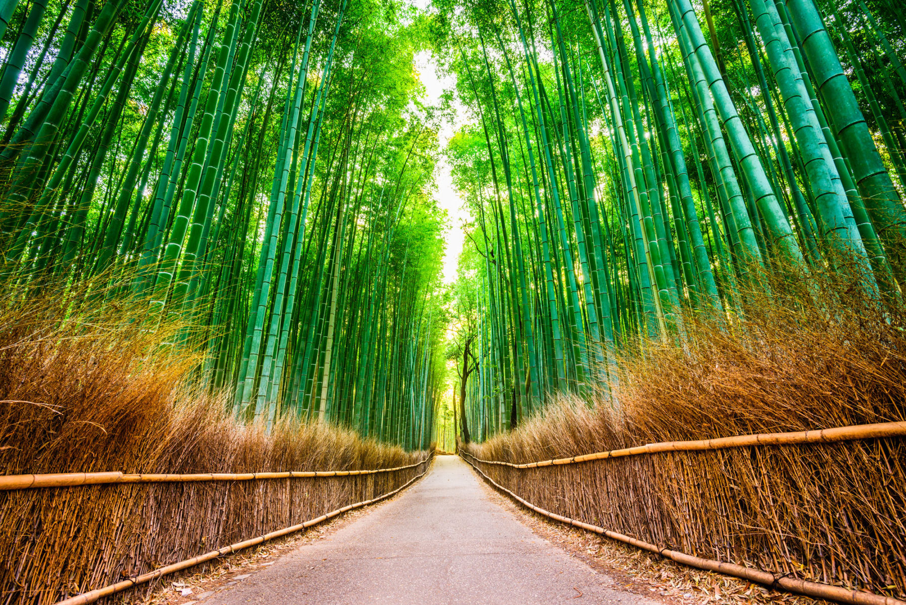 bamboo e1517522414524 - Magnificent Japan